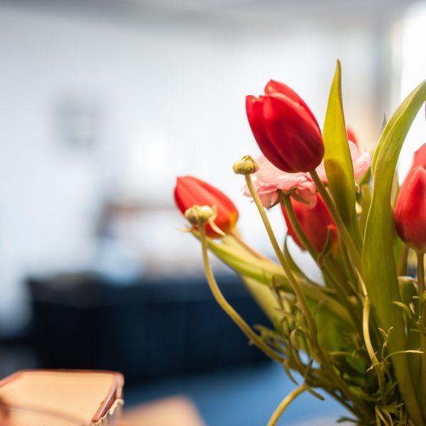 Verse Tulpen!